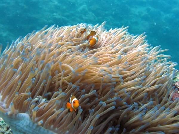 Lặn biển ở quần đảo Perhentian giữa Đông Bắc Malaysia và Thái Lan, bạn sẽ được chiêm ngưỡng những rặn san hô đẹp, rùa biển, cá mập... Nước biển trong veo là điều kiện lý tưởng để ngắm hệ động thực vật sinh động dưới mặt nước.