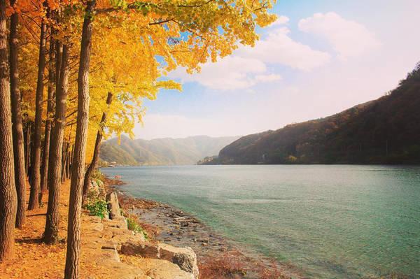Đảo Nami, một điểm đến mùa thu rất được ưa thích tại Hàn Quốc - @johannafy