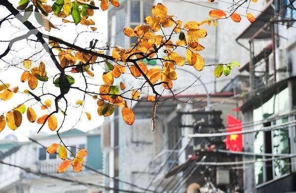Hà Nội mùa thu tình và đẹp đến nao lòng.