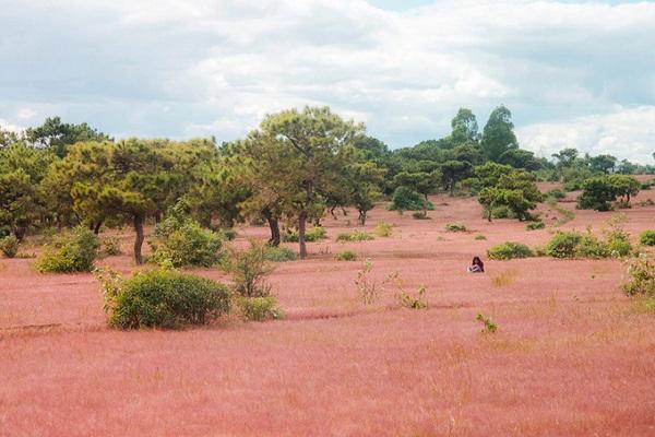 """Nhắc đến cỏ hồng, nhiều người sẽ nghĩ ngay đến Đà Lạt. Nhưng ít ai biết nằm cách thành phố Pleiku (tỉnh Gia Lai) khoảng 20 km cũng một đồi cỏ hồng đang được nhiều bạn trẻ, nhiếp ảnh gia săn lùng. Khu vực này thuộc xã Glar, huyện Đắk Đoa nên nhiều người còn đặt tên là """"Thung lũng cỏ hồng Glar"""". Ảnh: Nguyễn Hồng Thiên."""