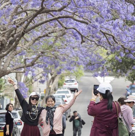 Inner Sydney: Du khách nên ghé thăm cây phượng tím khổng lồ ở Đại học Sydney. Đây là một trong những cây phượng tím nổi tiếng nhất ở thành phố này. Các khu ngoại ô như Glebe, Camperdown, Erkinseville cũng là những nơi rất đáng để ghé qua.