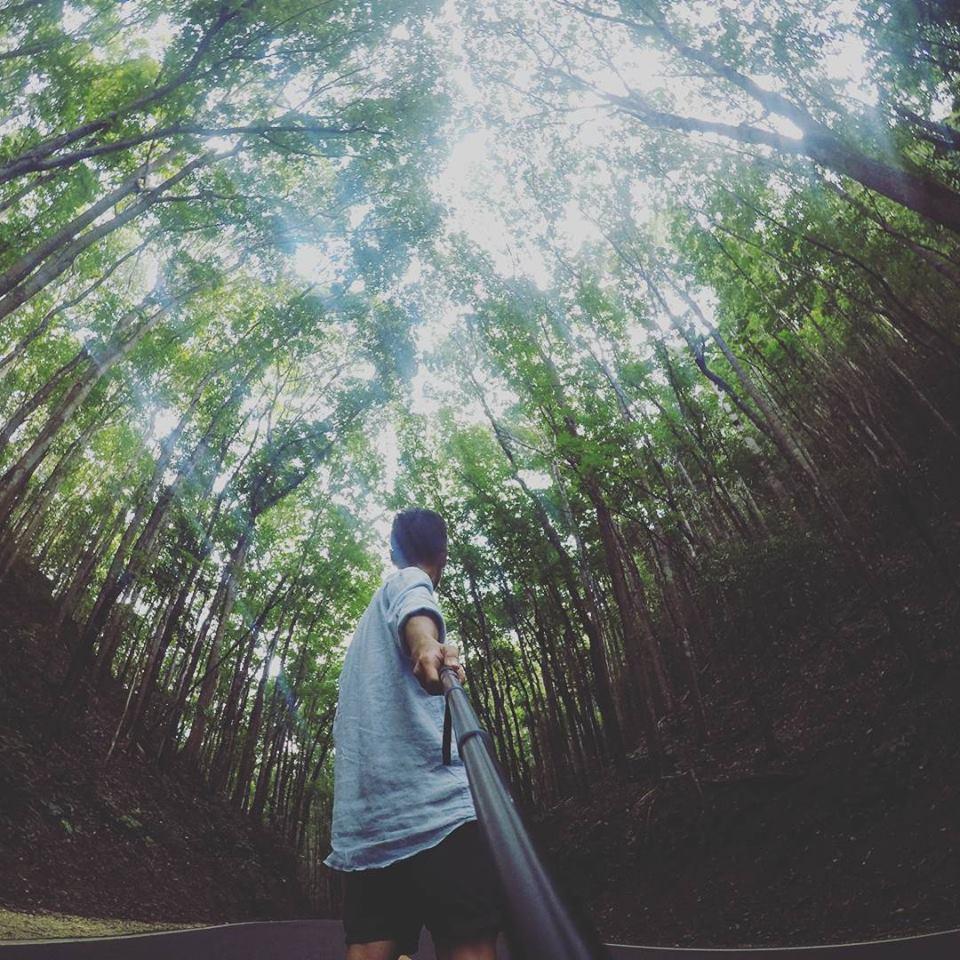 Con đường dẫn đến Chocolate Hills, bạn sẽ đi qua một khu rừng cây ảo diệu vô cùng. Ảnh: Tiểu Duy