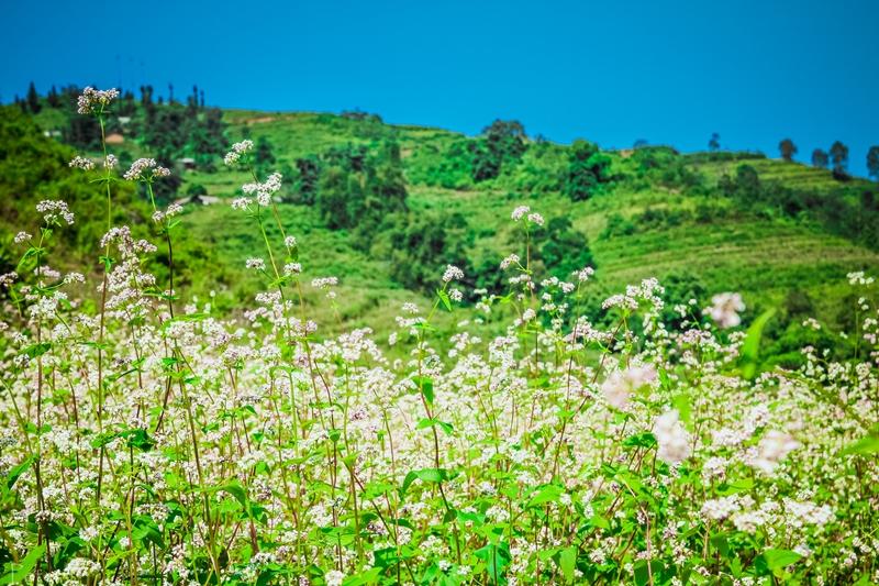 Lên Hà Giang ngắm mùa tam giác mạch