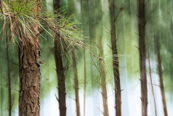 """Bằng nghệ thuật vẽ 3D phối với khung cảnh thực, container trưng bày này như chìm giữa khu rừng. Đây là tác phẩm """"Rừng thông"""" của họa sĩ Trịnh Minh Tiến."""