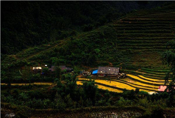 Những ruộng lúa còn sót lại sau mùa gặt