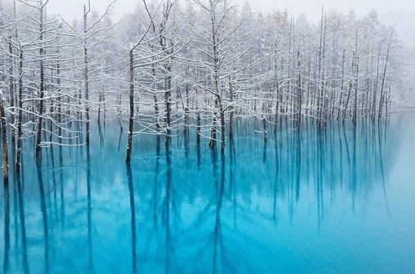 Hồ Xanh Biei, Hokkaido  Biei là một ngôi làng nhỏ, được bao quanh bởi thiên nhiên tươi đẹp. Hồ Xanh thực ra là một công trình nhân tạo, hình thành sau khi xây đập nước năm 1988 để chặn dòng chảy từ sông Bieigawa. Màu xanh trong nước hồ là do hợp chất nhôm hydroxit. Ngoài ra tùy thời gian trong ngày, tùy mùa mà nước có màu xanh đậm hay không. Phong cảnh hồ vào mùa đông càng kỳ ảo hơn khi hàng cây có tuyết phủ trắng cành, phản chiếu xuống mặt hồ phẳng lặng và xanh mướt. Ảnh: Kent Shiraishi.