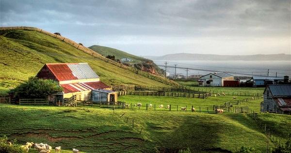 Ngày nay, khoảng 600 người sống ở đảo Chatham, và 40 người định cư trên đảo Pitt. Ngành kinh tế chính ở đây là ngư nghiệp, cùng du lịch, trồng trọt và khai thác rừng. Ảnh: Republikapodrozy.