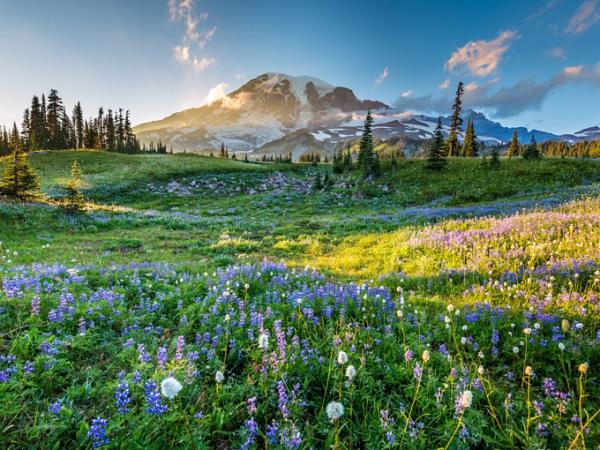 Rainier, Washington, Mỹ Vùng Rainier không chỉ có một ngọn núi lửa mà còn trải rộng và tạo ra 6 dòng sông khác. Đỉnh Rainier thường xuyên đóng băng, những du khách định leo núi ở đây phải chuẩn bị thật kỹ trước khi đi. Dù vào tháng 7, ở Rainier vẫn có tuyết rơi ở độ cao 1.500 - 2.400 m. Ảnh: Shutterstock.
