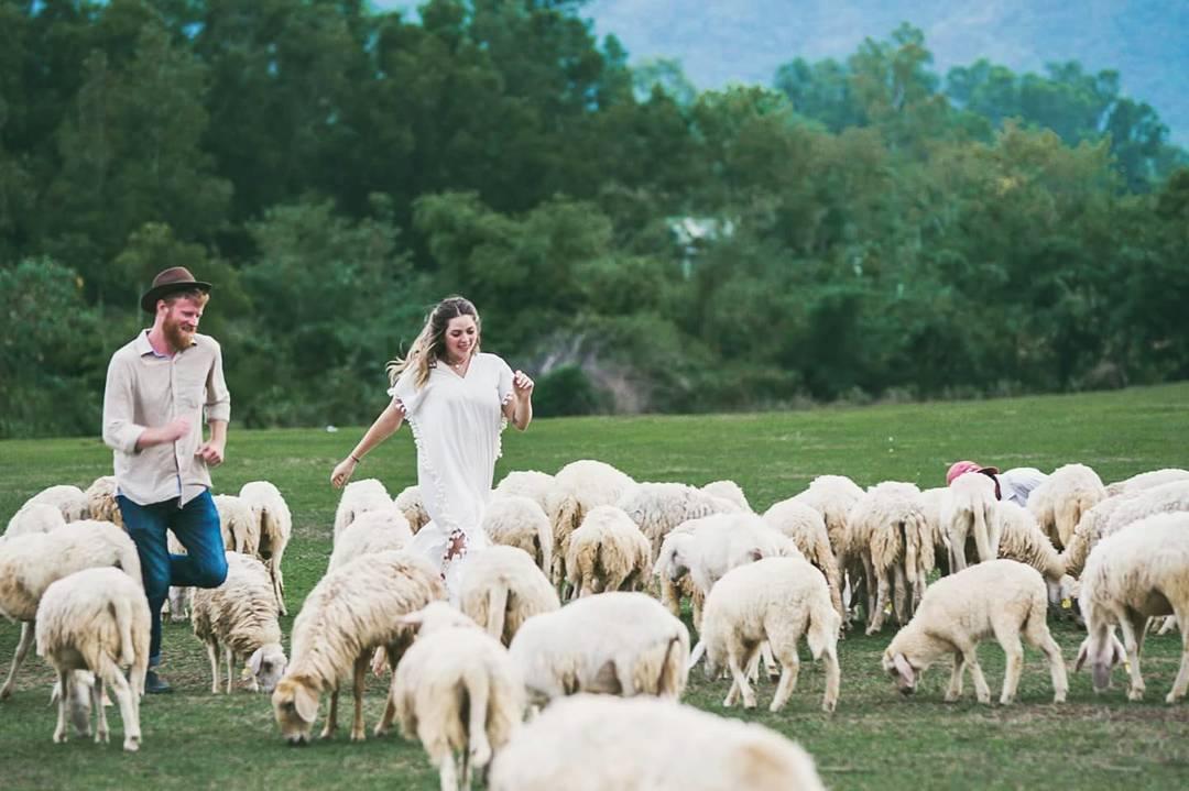 Ảnh: Fb Đồng cừu Suối Nghệ