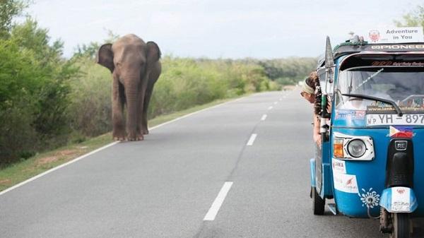 Ngồi xe tuk tuk khám phá Sri Lanka  Một chuyến đi nghe đơn giản nhưng cũng thử thách không kém với 10 ngày phiêu lưu ở Sri Lanka. Du khách sẽ tự mình khám phá ra những địa điểm thú vị, thu thập được nhiều thông tin hữu ích từ dân địa phương. Ảnh: Largeminority.