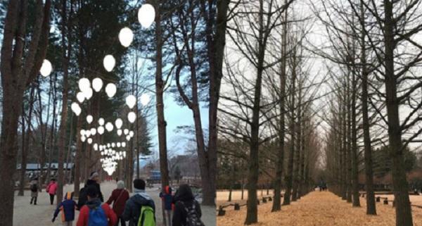 Tham quan đảo Nami  Một chuyến khám phá Hàn Quốc không thể kết thúc nếu không có trải nghiệm bước đi dưới hàng cây thẳng tắp ở đảo Nami. Từ Seoul có thể đi tới Nami bằng cách đón tàu từ trạm Yongsan xuống trạm Gapyeong rồi đón phà ra đảo. Ảnh: Asiaone.