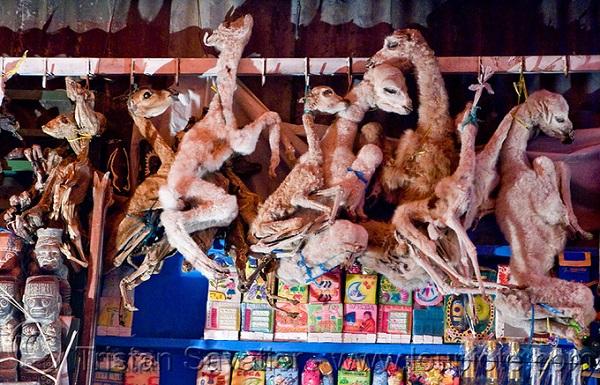 Mercado de las Brujas là chợ phù thủy nằm ở khu vực thu hút nhiều du khách nhất của thành phố La Paz. Những bào thai llama khô quắt treo lơ lửng hoặc buộc thành bó là hình ảnh mà du khách có thể nhìn thấy ở khắp nơi trong chợ. Ảnh: imgur.
