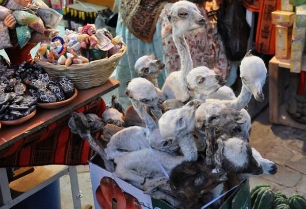 Bào thai llama khô là một trong những mặt hàng nổi tiếng và phổ biến ở chợ phù thủy. Nó được dùng để chôn dưới móng những ngôi nhà mới ở Bolivia nhằm xua đuổi các linh hồn ác quỷ. Ảnh: flickr.