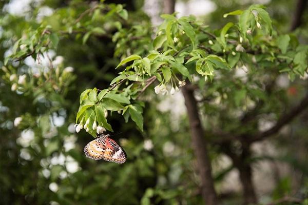 Sân bay sang chảnh Changi sở hữu khu vườn tràn ngập bướm ở nhà ga số 3 - Ảnh: Telegraph
