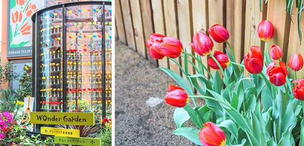 cung-dien-hoa-tulip-ruc-ro-o-nhat-ban-ivivu-1