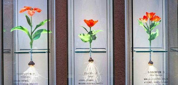 cung-dien-hoa-tulip-ruc-ro-o-nhat-ban-ivivu-3