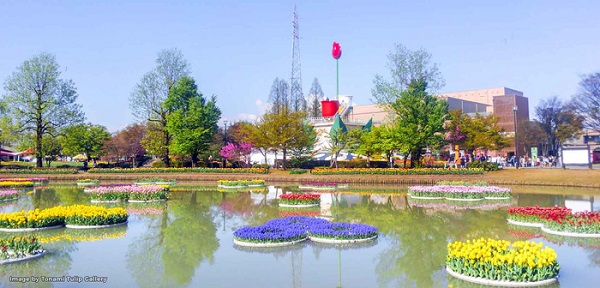 cung-dien-hoa-tulip-ruc-ro-o-nhat-ban-ivivu-7
