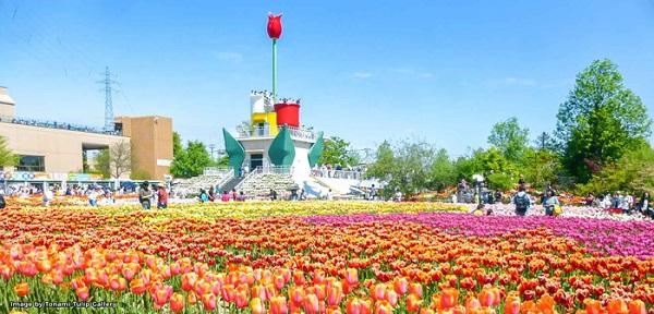 cung-dien-hoa-tulip-ruc-ro-o-nhat-ban-ivivu-8