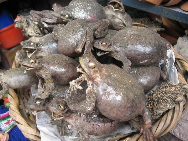 Những giỏ ếch khô Aymara khiến du khách rợn gai ốc lại được người Bolivia tin rằng đem lại sự giàu có, sung túc - Ảnh: Revolution_Ferg