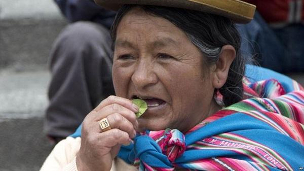 Bên cạnh đó, một số thứ sử dụng để chữa bệnh như lá coca khô khá phổ biến trong chợ, có tác dụng giúp cơ thể tỉnh táo, phấn chấn... hay các thầy lang Yatiri, dùng các bộ phận của động vật làm bùa cầu thần linh trị bệnh - Ảnh: voanews