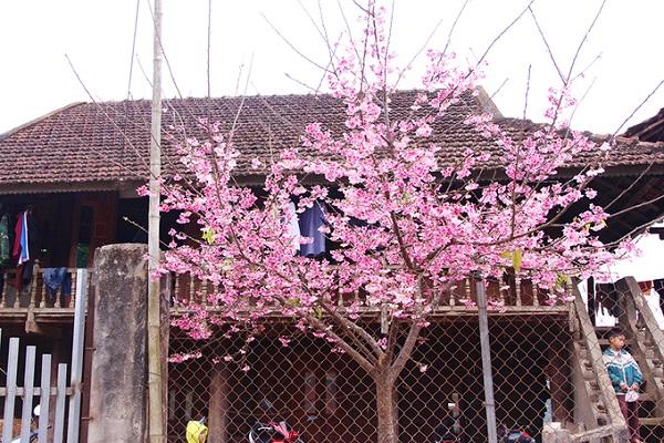 Đảo được người dân quanh khu vực gọi là đảo hoa hay đảo hoa đào vì có khoảng 300-400 cây hoa anh đào được trồng và ươm mầm. Cuối tháng 12 và đầu tháng 1 mỗi năm là thời điểm hoa bắt đầu nở rộ, thu hút khách du lịch, đặc biệt là những người thích ngắm hoa anh đào.