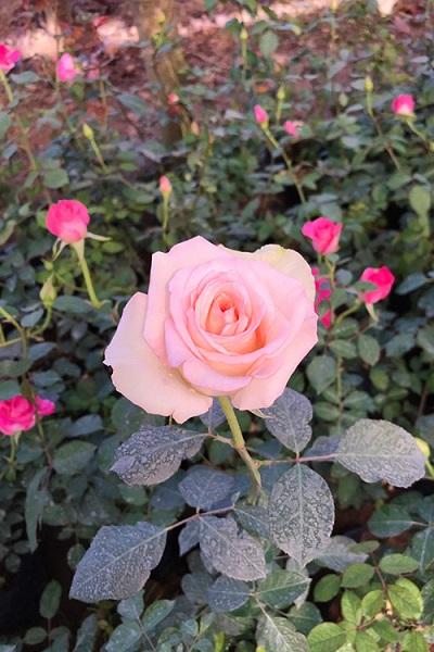 Mỗi loài hoa được trồng riêng ở các không gian khác nhau, khách có thể tham quan nhưng nhớ đừng bẻ hay giẫm lên hoa.