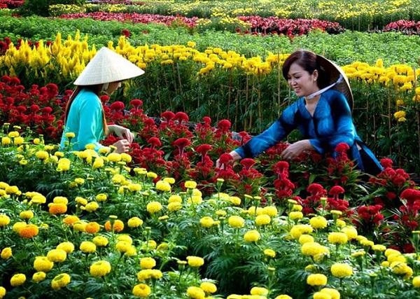 Làng hoa Sa Đéc ngập tràn hương sắc hoa mỗi độ xuân về