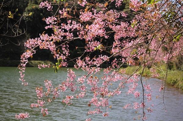 """Từ thành phố Kon Tum theo quốc lộ 24 khoảng 60 km, du khách sẽ đến với khu du lịch sinh thái Măng Đen thuộc huyện Kon PLông. Măng Đen được mệnh danh là """"Đà Lạt thứ hai ở Kon Tum"""" với các điểm dừng chân hấp dẫn như công viên trung tâm Măng Đen, đường lên núi Ngọc Lễ, hồ Đăk Ke..."""
