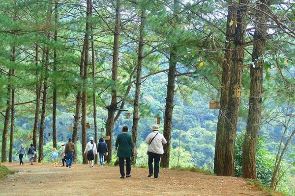 Toàn khu có diện tích khoảng 38 ha, được thiết kế có nhiều không gian khác nhau để phục vụ khách. Điểm nổi bật nhất ở đây là rừng hoa anh đào, con đường tam giác mạch và bàn tay Phật khổng lồ nằm chênh vênh ở vách núi.