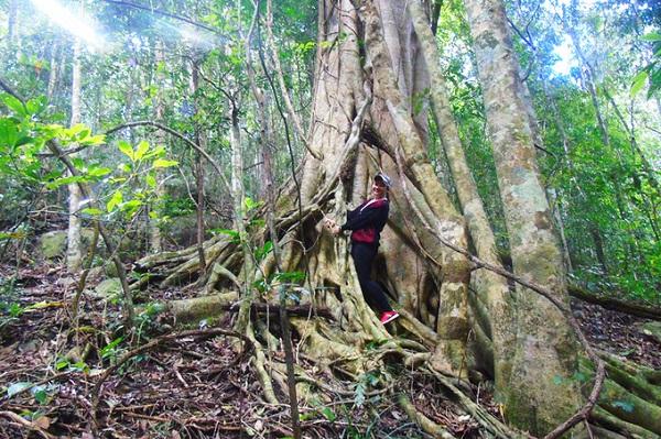 Bên trong điền trang là khu rừng rậm với nhiều cây cổ thụ lớn. Với người yêu thích thiên nhiên thì đây là điểm đến lý tưởng cho dịp cuối tuần.