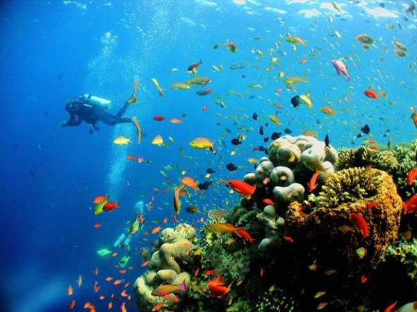Các rặng san hô phát triển ngay bên dưới các khu resort. Chỉ cần bước xuống nước, bạn đã có thể bắt đầu ngay chuyến thám hiểm của mình.