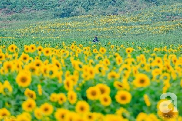 """Nhìn đâu cũng thấy hoa, như thung lũng trong phim """"Ngôi nhà trên thảo nguyên"""", xuyến xao hết mức."""