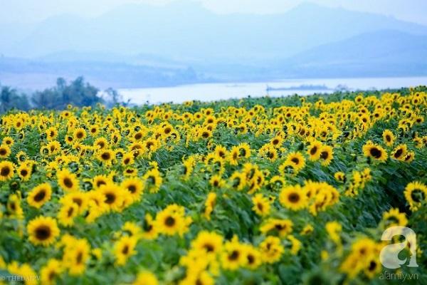 Khung cảnh lãng mạn này đang hiện diện tại trang trại TH, huyện Nghĩa Đàn, tỉnh Nghệ An.