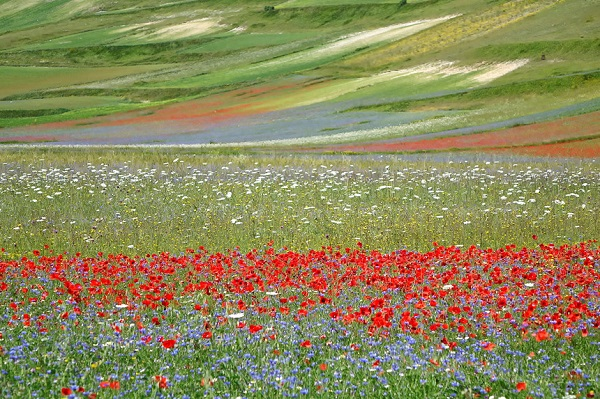 Piano Grande, Umbria: Đây là một trong những vùng cao nguyên tốt nhất châu Âu, nằm ở độ cao trên 1.200 m và được bao quanh bởi các ngọn núi. Vào cuối tháng 5 và đầu tháng 6, nơi đây nổi bật với những thảm hoa rực rỡ với nhiều loại hoa khác nhau mang đến cảnh quan tuyệt đẹp. Ảnh: Locationscout.