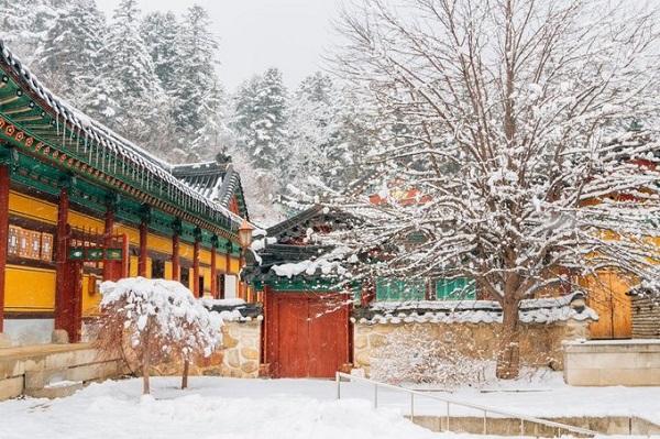 Đền Woljeongsa là một điểm đến lịch sử thú vị cho du khách ghé thăm khi tới Pyeongchang. Được xây dựng năm 643, quần thể đền thờ Phật cổ này cũng là một trong 10 vườn quốc gia của Hàn Quốc. Ảnh: BI.