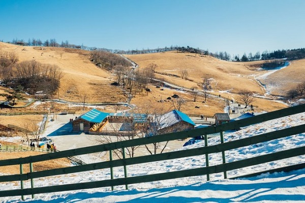 Ở thị trấn vùng cao Daegwallyeong, du khách có thể tham quan nông trại cừu, học cách cưỡi ngựa hoặc tham gia lớp làm phomat. Đây là vùng đất xuất hiện trong nhiều bộ phim Hàn Quốc. Ảnh: BI.