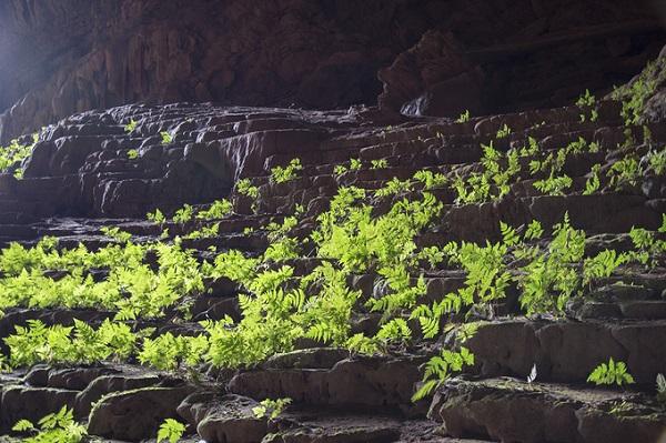 Ánh sáng chiếu vào khá sâu trong hang giúp nhiều cây dương xỉ mọc lên xanh tốt. Pygmy được Hiệp hội Hang động Hoàng gia Anh công bố là hang lớn thứ tư thế giới.