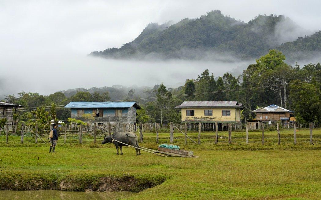 Nhiều người lựa chọn hành trình bay từ Miri đến Mario để chinh phục vùng núi cao mờ sương Kelabit Highlands, trải nghiệm lối sống và sinh hoạt cùng các tộc người địa phương.