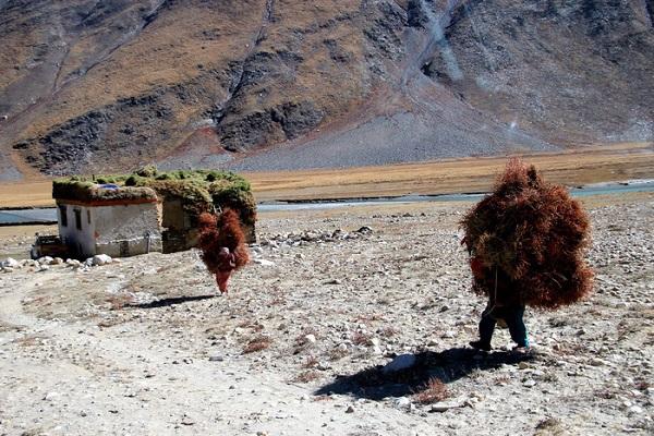 Người dân đi cắt cỏ ở Bắc Ấn Độ