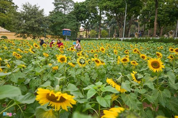 Chỉ với 30.000 đồng, bạn không chỉ được chiêm ngưỡng vườn hoa hướng dương tuyệt đẹp giữa lòng Hà Nội mà còn được tham quan các địa điểm trong khu di tích Hoàng thành Thăng Long.