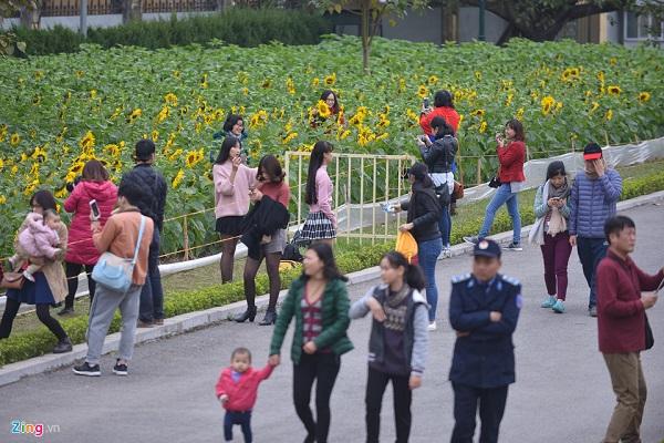Buổi chiều ngày cuối tuần, đông đảo người dân thủ đô và du khách ghé thăm. Trước đây một vườn hoa hướng dương nổi tiếng khác ở tận Nghệ An cũng thu hút nhiều bạn trẻ từ xa lặn lội đến để chụp ảnh.