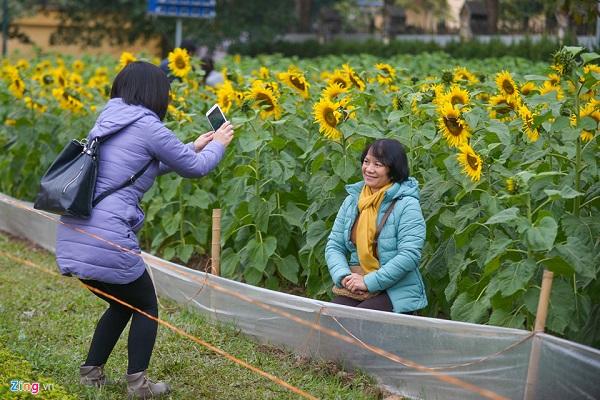 Bà Ngọc biết được thông tin về vườn hoa trên bản tin thời sự nên cùng người bạn đến chụp ảnh ngày cuối tuần.