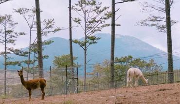 vuon-thu-muon-tham-quan-phai-canh-gio-o-lam-dong-ivivu-2