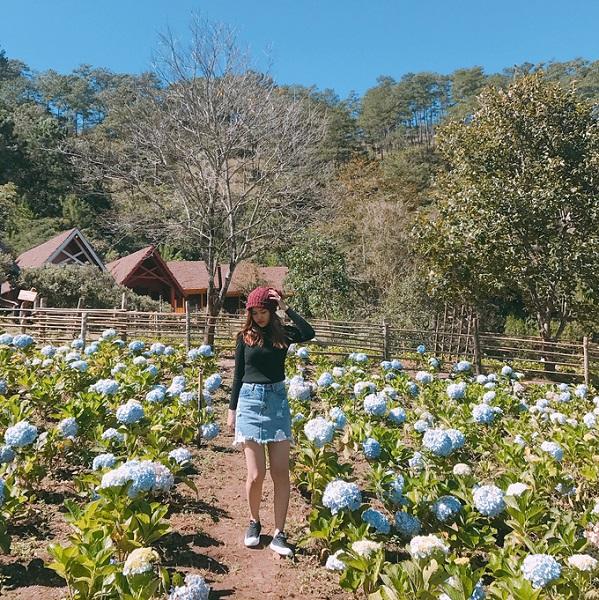 Làng Cù lần  Cẩm tú cầu ở làng Cù lần được trồng thành một khu vườn nhỏ, đồng thời trồng xen kẽ cùng các tiểu cảnh của một ngôi làng ẩn giữa rừng thông xanh. Đây cũng là nơi du khách được ngắm nhiều kỳ hoa dị thảo khác của Đà Lạt. Ảnh: Truonganct94.
