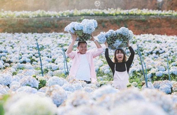 Huyện Lạc Dương  Cách Đà Lạt khoảng 15 km, vườn hoa thuộc huyện Lạc Dương bên cạnh tỉnh lộ 723 - tuyến đường nối thành phố Đà Lạt và Nha Trang. Đây là một trong những khu vườn cẩm tú cầu lớn nhất ở Lâm Đồng, với diện tích khoảng 2 ha. Ảnh: CHIT Photography.