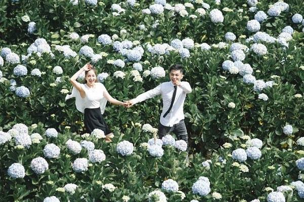 Trại Mát  Một khu vườn cẩm tú cầu khác rộng không kém nằm ở Trại Mát. Nơi này cũng cách trung tâm thành phố khoảng 15 km. Rất nhiều du khách, trong đó có vợ chồng Khánh Thi - Phan Hiển đã chọn nơi đây để thực hiện bộ ảnh. Tại đây khách cũng có thể hỏi mua hoa cẩm tú cầu mang về.