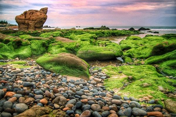 Biển Cổ Thạch là một trong những điểm đến được nhiều người ưa thích ở Bình Thuận. Nơi đây níu bước chân du khách nhờ nước biển trong xanh, những bãi đá nhiều màu sắc, hình dáng tự nhiên nhờ tác động của nước biển và thủy triều. Vì màu sắc đa dạng, bãi đá này còn được du khách gọi là bãi đá 7 màu.  Cứ đến khoảng tháng 1 - 2 hàng năm, phượt thủ khắp nơi, đặc biệt là người yêu thích nhiếp ảnh lại đổ về biển Cổ Thạch để ngắm nhìn bãi đá này khoác lên mình chiếc áo xanh ngắt, mượt mà. Năm nay, khí hậu thay đổi, nắng nóng nhiều nên rêu cũng xanh, nhiều và phủ sớm hơn.