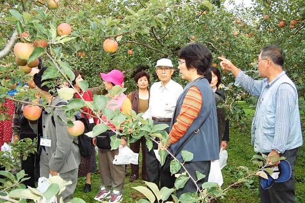 Ngoài việc thu hoạch táo cung cấp cho trong và ngoài nước thì tỉnh Aomori còn được biết đến như là một thiên đường du lịch tuyệt vời. Nơi đây nổi tiếng bởi những khu vườn táo bạt ngàn trải dài hút mắt, những hoạt động vui chơi, hái táo thu hút rất đông khách du lịch tới tham quan.