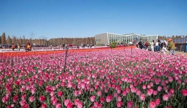 hoa-tulip-no-ruc-ro-o-cong-vien-trung-quoc-ivivu-6