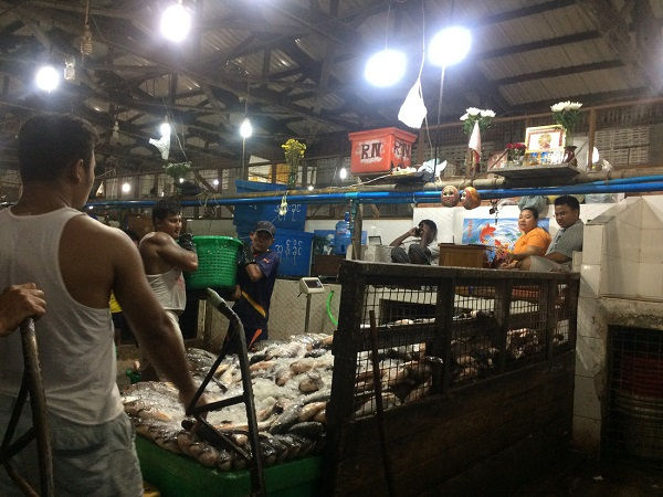 Cá được chuyển từ tàu thuyền vào từng sạp hàng đêm ở chợ đầu mối hải sản Yangon, Myanmar - Ảnh: Bông Mai